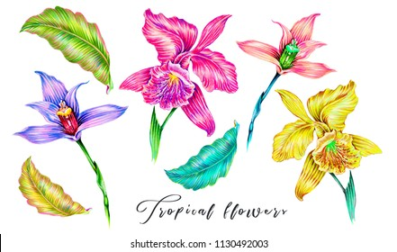 Tropical flowers, jungle leaves, orchid flower. Exotic summer illustrations, floral elements isolated. Botanical colorful illustration for greeting card, wallpaper