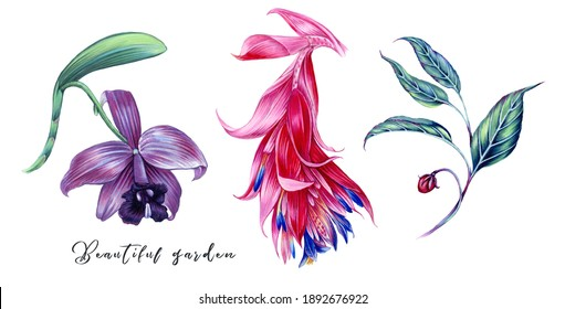 Tropical flowers, orchid, beautiful red flower, branch with leaves, floral jungle set isolated on white background. Summer illustrations. Hand drawn elements. Floral clip art. Exotic botanical print.