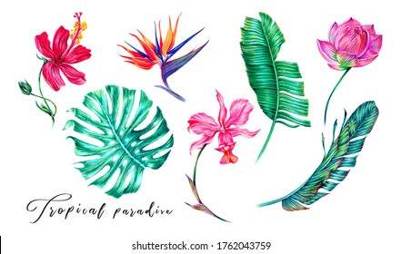 Tropical flowers, orchid, hibiscus, strelitzia, pink lotus, jungle leaves, monstera, banana leaf set isolated. Summer illustrations. Hand drawn elements. Floral clip art. Exotic botanical print.