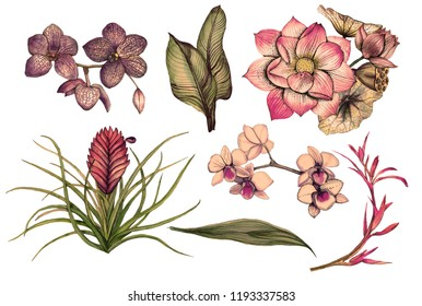 Tropical flowers, orchid, lotus, tillandsia, strelitzia, watercolor-painted leaves on a white background