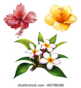 Tropical flowers set drawing (Hibiscus red and yellow, Frangipani)