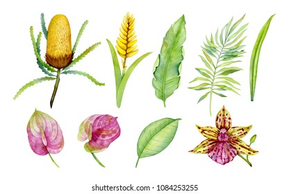 Tropical flowers, watercolor, gold paint