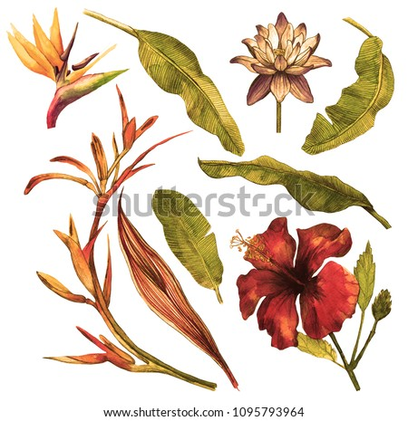 Tropical foliage set with