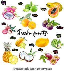Tropical fruits watercolor set illustration.