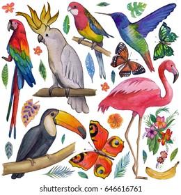 Tropical garden Birds, butterflies, parrots, flowers, fruits, palms Toucan Flamingo ?ockatoo Hummingbird Hand drawn watercolor images, icons Tropical summer vacation