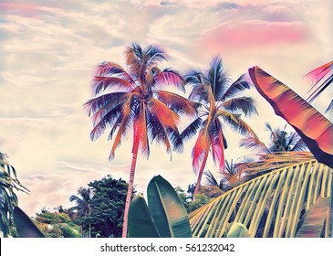 Tropical garden and sky scene. Sunset landscape with palm trees and exotic plants. Tropics nature digital illustration. Summer vacation banner template with text place. Outdoor travel background image