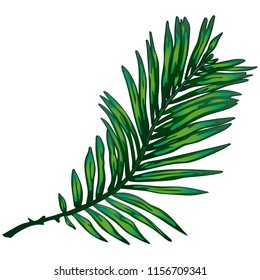 Tropical green leaves isolated on white background. Leaf for background, texture, wrapper pattern, frame or border.