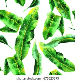 Tropical Hawaii leaves palm tree in a watercolor style isolated. Aquarelle wild flower for background, texture, wrapper pattern, frame or border