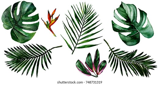 Tropical Hawaii leaves in a watercolor style isolated. Aquarelle wild flower for background, texture, wrapper pattern, frame or border.