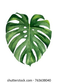 Tropical leaf. Watercolor illustration on white.