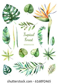 Tropical Leafy collection. Handpainted watercolor floral elements.Watercolor leaves, branches,flower.Perfect for you unique projects,template,wedding invitations,greeting cards,graphic,quotes.