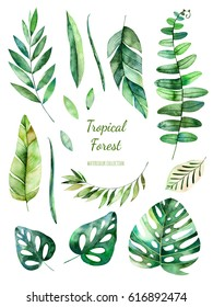 Tropical Leafy collection. Handpainted watercolor floral elements.Watercolor leaves, branches.Perfect for you unique projects,template,wedding invitations,greeting cards,graphic,quotes,poster