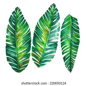 tropical leaves. Banana palm leaves illustration in watercolor.