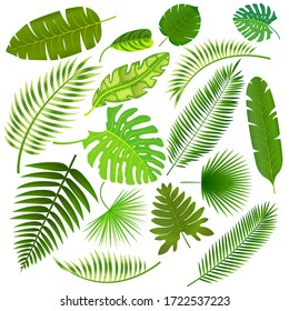 Tropical leaves collection isolated illustration