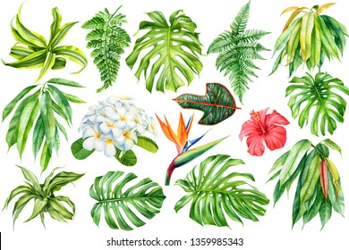 tropical leaves and flowers on an isolated background, a large set of green plants, watercolor botanical illustration, floral design, plumeria, hibiscus, wipers, palm trees, monstera, ficus, fern