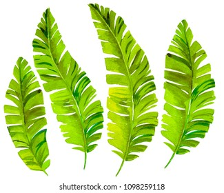 Tropical leaves, isolated elements. A set of beautiful artistic watercolor palm leaves, on white background. Tropical foliage elements.