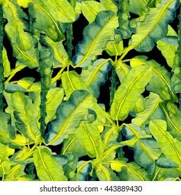 Tropical leaves pattern. Palm watercolor seamless background. Exotic tropical leaves pattern. Summer swimwear seamless pattern with banana palms.