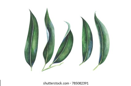 Tropical leaves set isolated on white background. Watercolor hand drawn illustration.