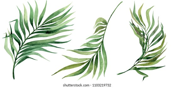 Tropical leaves set. Jungle botanical watercolor illustrations, floral elements, Palm leaves and other.