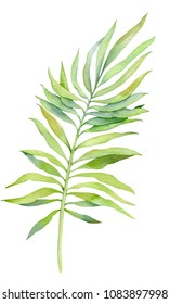Tropical leaves, watercolor
