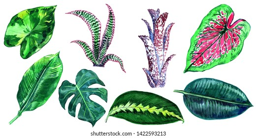 Tropical leaves in watercolor style.