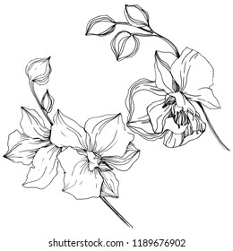 vector diagramhandflowerwatercolortropical plant t