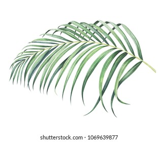 Tropical palm branch isolated on white background. Watercolor hand drawn illustration.