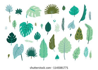 tropical palm leaves, jungle leaves illustrations set