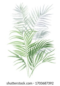 Tropical plant, soft green shade of minimalistic style. A watercolor illustration, digitized and with a white background.
