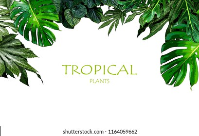Tropical plants isolated frame background