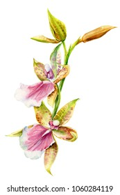 tropical plants, orchid flower, watercolor illustration, botanical painting, hand drawing, flora