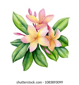 tropical plumeria, watercolor