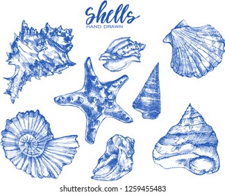 tropical sea shells. Seashell set isolated.Hand drawn illustrations of engraved line.Collection of sketches various mollusk sea shells different forms.Sea shell, mollusk,sea shell,nautilus
