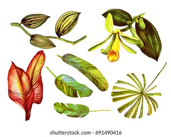 Tropical set isolated on white background.  vanilla, banana leaves, flowers, on white background