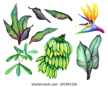 Tropical set isolated on white background. Banana, banana leaves, flowers on white background