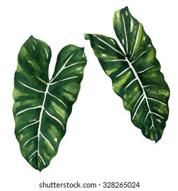 tropical Split Leaves plant botanic watercolor painting on white background