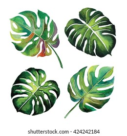 tropical Split Leaves plant botany watercolour object leaf painting on white background illustration