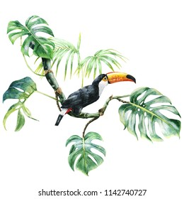 tropical. toucan in the leaves. watercolor