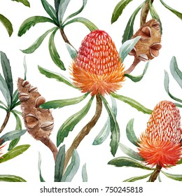 Tropical watercolor pattern Australian Banksia flower , seed and leaves