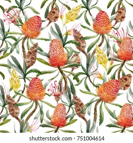 Tropical watercolor pattern Australian Banksia flower , seed and leaves. yellow exotic flowers