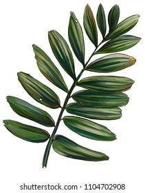 tropics, tropical plants, palm leaves, illustration