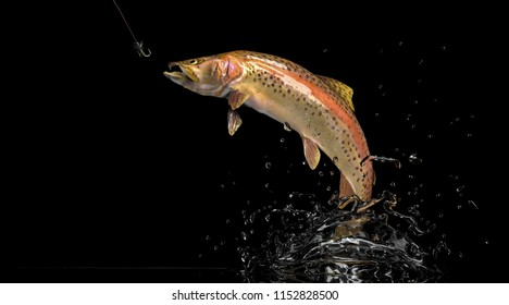 Trout Salmon fish black background 3d rendering