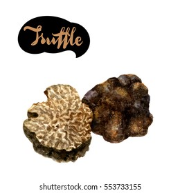Truffle watercolor illustration. Truffle slice watercolor isolated on white background.