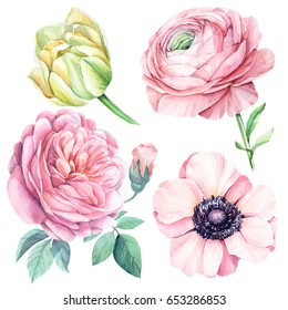 Tulip, anemones, ranunculus, roses  Watercolor Flower set, botanical illustration.