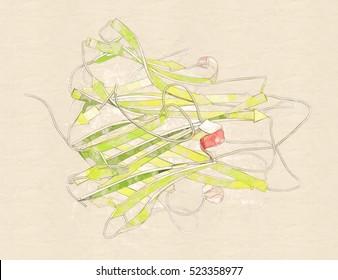Tumor necrosis factor alpha (TNF) cytokine protein molecule, 3D rendering. Clinically used inhibitors include infliximab, adalimumab, certolizumab and etanercept. Cartoon representation.