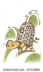 Turtle hare race
