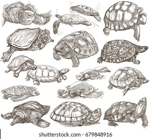 TURTLES (Tortoises) animals. Collection of an hand drawn illustrations. Freehand sketches on white. Line art technique.
