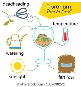 Tutorial how to care florarium. Succulents inside glass terrarium, elements for care florarium: deadheading, watering, temperature, fertilizer, sunlight