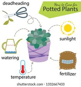 Tutorial how to care for potted plant. Succulents inside glass terrarium, elements for care florarium: deadheading, watering, temperature, fertilizer, sunlight
