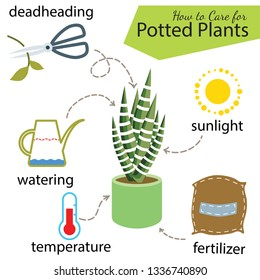 Tutorial how to care for potted plant. Succulents in pot, elements for care: deadheading, watering, temperature, fertilizer, sunlight